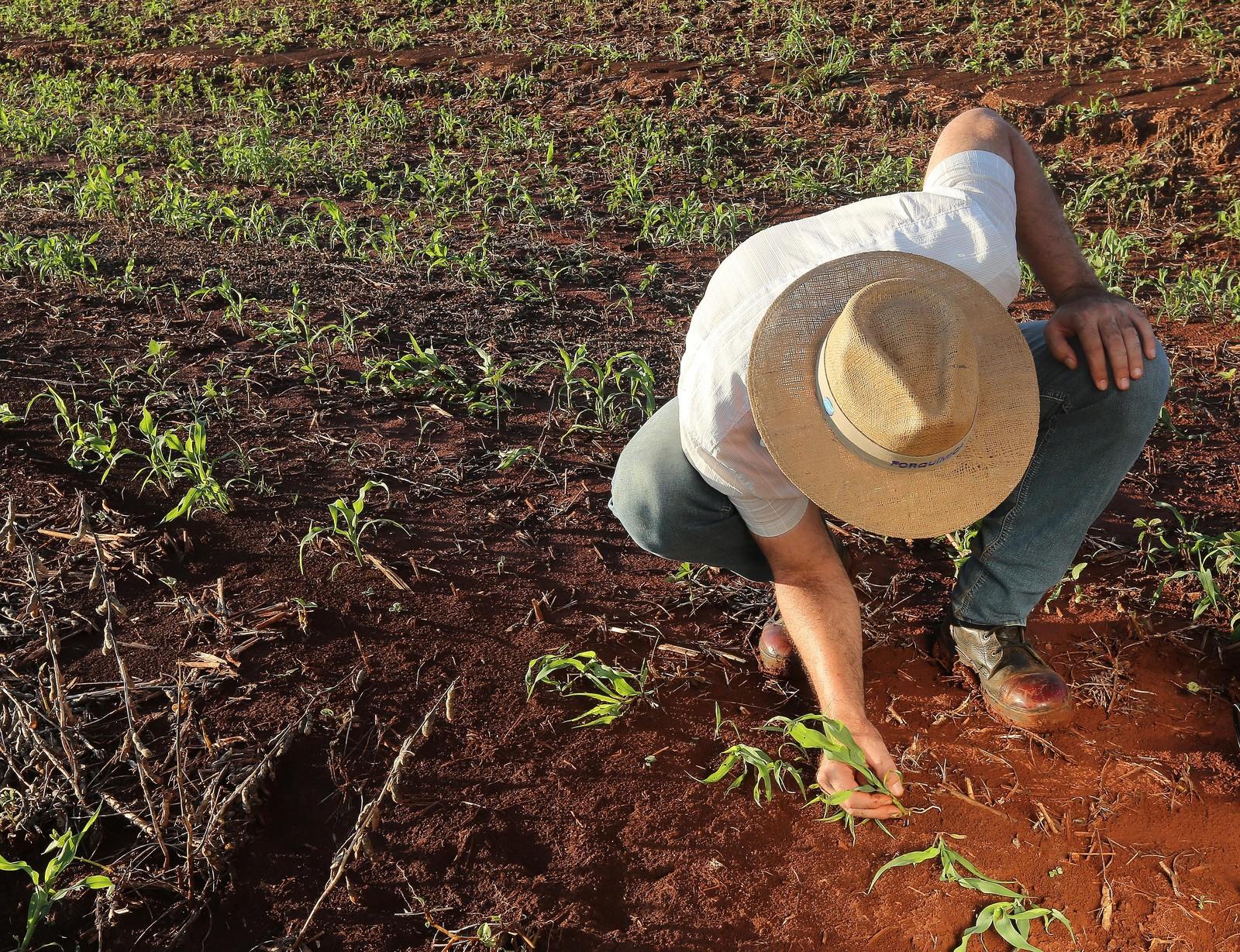 Subsídio de R$ 1 bilhão para seguro rural é recorde, mas produtores querem mais recursos