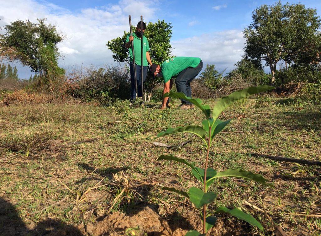 SFI comemora Dia Mundial do Meio Ambiente com plantio de mudas
