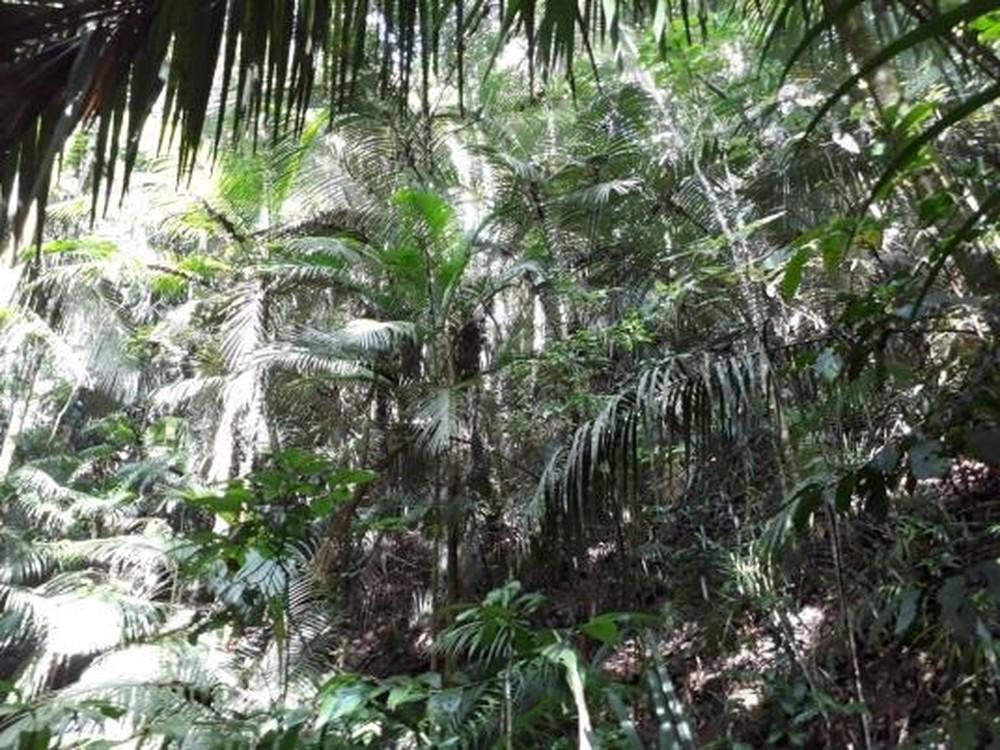 Inea reconhece quatro novas Reservas Particulares do Patrimônio Natural no interior do RJ