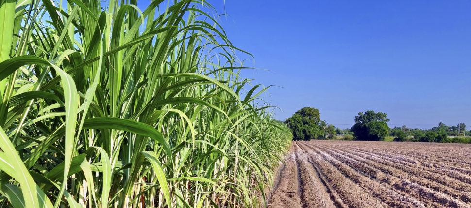 Campos deve ter expansão do plantio de cana-de-açucar, diz diretor de usina