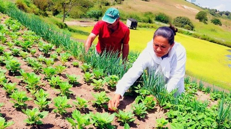 Chamada Pública para Agricultura Familiar no dia 18